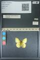 http://mczbase.mcz.harvard.edu/specimen_images/ent-lepidoptera/images/2013_10_12/IMG_150513.JPG
