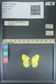 http://mczbase.mcz.harvard.edu/specimen_images/ent-lepidoptera/images/2013_10_12/IMG_150515.JPG