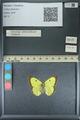 http://mczbase.mcz.harvard.edu/specimen_images/ent-lepidoptera/images/2013_10_12/IMG_150516.JPG
