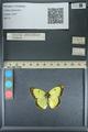 http://mczbase.mcz.harvard.edu/specimen_images/ent-lepidoptera/images/2013_10_12/IMG_150517.JPG