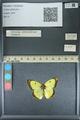 http://mczbase.mcz.harvard.edu/specimen_images/ent-lepidoptera/images/2013_10_12/IMG_150518.JPG