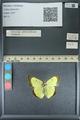 http://mczbase.mcz.harvard.edu/specimen_images/ent-lepidoptera/images/2013_10_12/IMG_150521.JPG