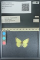 http://mczbase.mcz.harvard.edu/specimen_images/ent-lepidoptera/images/2013_10_15/IMG_150549.JPG