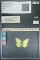 http://mczbase.mcz.harvard.edu/specimen_images/ent-lepidoptera/images/2013_10_15/IMG_150550.JPG