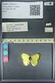 http://mczbase.mcz.harvard.edu/specimen_images/ent-lepidoptera/images/2013_10_15/IMG_150553.JPG