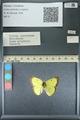 http://mczbase.mcz.harvard.edu/specimen_images/ent-lepidoptera/images/2013_10_15/IMG_150554.JPG