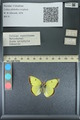 http://mczbase.mcz.harvard.edu/specimen_images/ent-lepidoptera/images/2013_10_15/IMG_150557.JPG