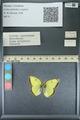 http://mczbase.mcz.harvard.edu/specimen_images/ent-lepidoptera/images/2013_10_15/IMG_150558.JPG