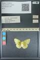 http://mczbase.mcz.harvard.edu/specimen_images/ent-lepidoptera/images/2013_10_15/IMG_150565.JPG