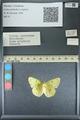 http://mczbase.mcz.harvard.edu/specimen_images/ent-lepidoptera/images/2013_10_15/IMG_150566.JPG