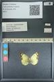 http://mczbase.mcz.harvard.edu/specimen_images/ent-lepidoptera/images/2013_10_15/IMG_150567.JPG