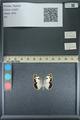 http://mczbase.mcz.harvard.edu/specimen_images/ent-lepidoptera/images/2013_10_15/IMG_150759.JPG
