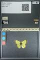 http://mczbase.mcz.harvard.edu/specimen_images/ent-lepidoptera/images/2013_10_28/IMG_151135.JPG