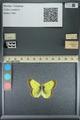 http://mczbase.mcz.harvard.edu/specimen_images/ent-lepidoptera/images/2013_10_28/IMG_151136.JPG