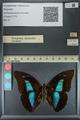 http://mczbase.mcz.harvard.edu/specimen_images/ent-lepidoptera/images/2013_11_12/IMG_151584.JPG