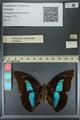 http://mczbase.mcz.harvard.edu/specimen_images/ent-lepidoptera/images/2013_11_12/IMG_151585.JPG