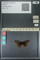 http://mczbase.mcz.harvard.edu/specimen_images/ent-lepidoptera/images/2013_11_19/IMG_151886.JPG