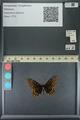 http://mczbase.mcz.harvard.edu/specimen_images/ent-lepidoptera/images/2013_11_19/IMG_151890.JPG