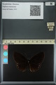 http://mczbase.mcz.harvard.edu/specimen_images/ent-lepidoptera/images/2013_11_20/IMG_151941.JPG