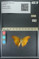 http://mczbase.mcz.harvard.edu/specimen_images/ent-lepidoptera/images/2013_11_23/IMG_152081.JPG