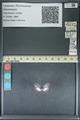 http://mczbase.mcz.harvard.edu/specimen_images/ent-lepidoptera/images/2013_11_26/IMG_152131.JPG