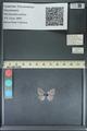 http://mczbase.mcz.harvard.edu/specimen_images/ent-lepidoptera/images/2013_11_26/IMG_152183.JPG