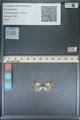 http://mczbase.mcz.harvard.edu/specimen_images/ent-lepidoptera/images/2013_11_30/IMG_152273.JPG