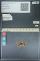 http://mczbase.mcz.harvard.edu/specimen_images/ent-lepidoptera/images/2013_11_30/IMG_152287.JPG