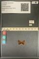 http://mczbase.mcz.harvard.edu/specimen_images/ent-lepidoptera/images/2013_12_04/IMG_152467.JPG