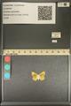 http://mczbase.mcz.harvard.edu/specimen_images/ent-lepidoptera/images/2013_12_04/IMG_152469.JPG