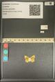 http://mczbase.mcz.harvard.edu/specimen_images/ent-lepidoptera/images/2013_12_04/IMG_152470.JPG