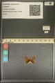 http://mczbase.mcz.harvard.edu/specimen_images/ent-lepidoptera/images/2013_12_04/IMG_152471.JPG