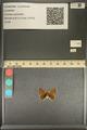http://mczbase.mcz.harvard.edu/specimen_images/ent-lepidoptera/images/2013_12_04/IMG_152472.JPG