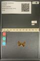 http://mczbase.mcz.harvard.edu/specimen_images/ent-lepidoptera/images/2013_12_04/IMG_152474.JPG