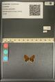 http://mczbase.mcz.harvard.edu/specimen_images/ent-lepidoptera/images/2013_12_04/IMG_152476.JPG