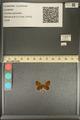 http://mczbase.mcz.harvard.edu/specimen_images/ent-lepidoptera/images/2013_12_04/IMG_152479.JPG