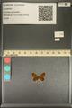 http://mczbase.mcz.harvard.edu/specimen_images/ent-lepidoptera/images/2013_12_04/IMG_152480.JPG