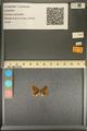 http://mczbase.mcz.harvard.edu/specimen_images/ent-lepidoptera/images/2013_12_07/IMG_152518.JPG