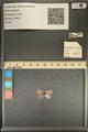 http://mczbase.mcz.harvard.edu/specimen_images/ent-lepidoptera/images/2013_12_07/IMG_152564.JPG