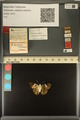 http://mczbase.mcz.harvard.edu/specimen_images/ent-lepidoptera/images/2013_12_11/IMG_152710.JPG