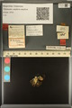 http://mczbase.mcz.harvard.edu/specimen_images/ent-lepidoptera/images/2013_12_11/IMG_152713.JPG