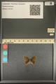 http://mczbase.mcz.harvard.edu/specimen_images/ent-lepidoptera/images/2013_12_17/IMG_152778.JPG