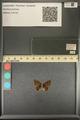 http://mczbase.mcz.harvard.edu/specimen_images/ent-lepidoptera/images/2013_12_17/IMG_152788.JPG