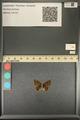 http://mczbase.mcz.harvard.edu/specimen_images/ent-lepidoptera/images/2013_12_17/IMG_152789.JPG