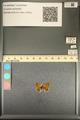 http://mczbase.mcz.harvard.edu/specimen_images/ent-lepidoptera/images/2013_12_18/IMG_152857.JPG