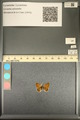 http://mczbase.mcz.harvard.edu/specimen_images/ent-lepidoptera/images/2013_12_18/IMG_152858.JPG