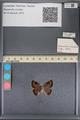 http://mczbase.mcz.harvard.edu/specimen_images/ent-lepidoptera/images/2014_01_07/IMG_152624.JPG