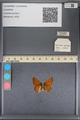 http://mczbase.mcz.harvard.edu/specimen_images/ent-lepidoptera/images/2014_01_07/IMG_152641.JPG