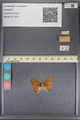 http://mczbase.mcz.harvard.edu/specimen_images/ent-lepidoptera/images/2014_01_07/IMG_152642.JPG