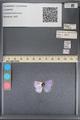 http://mczbase.mcz.harvard.edu/specimen_images/ent-lepidoptera/images/2014_01_07/IMG_152648.JPG